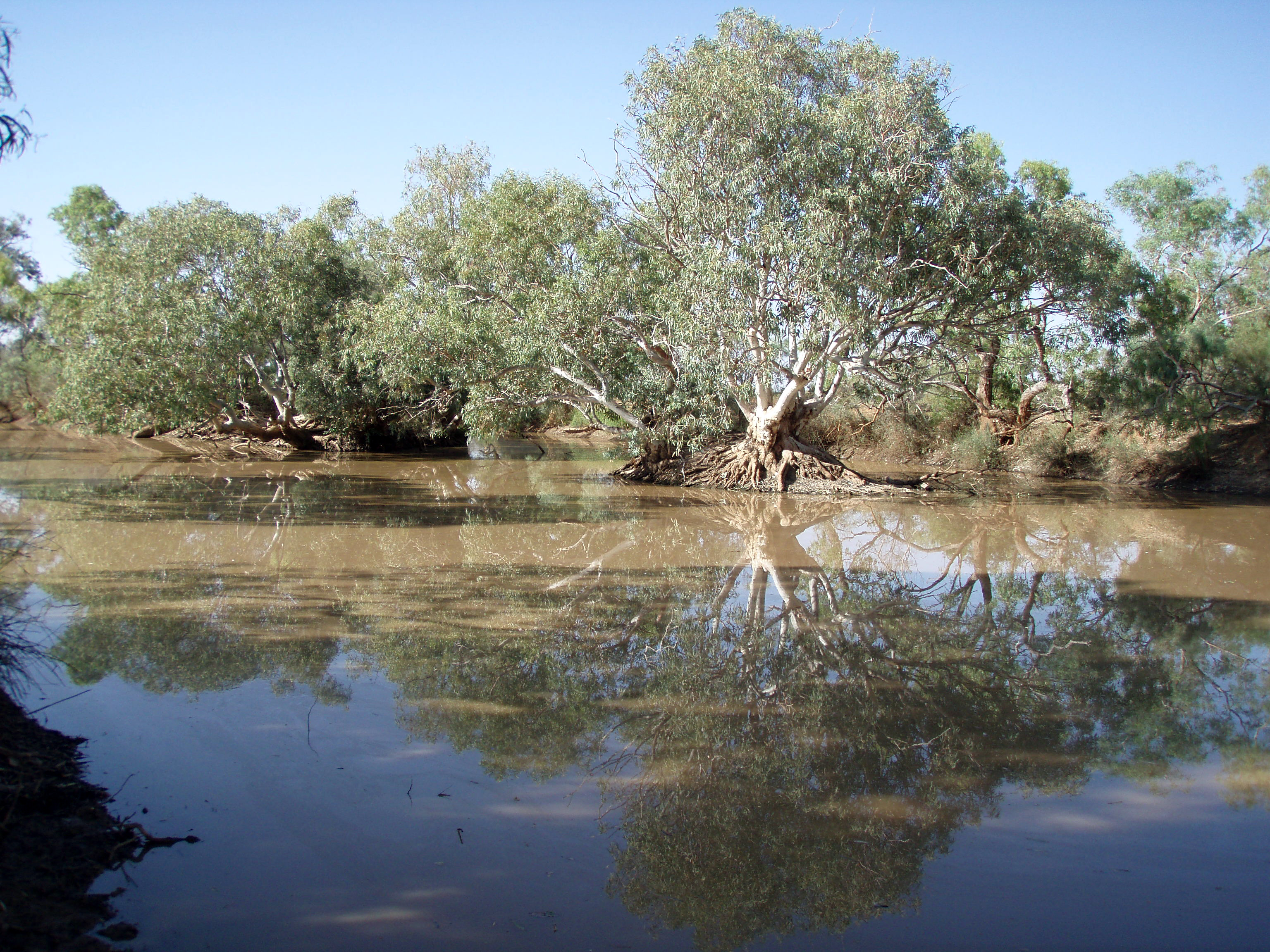 Hookeys waterhole in Neales catchment, SA. November 2009 Credit: ​Dale McNeil (South Australian Research and Development Institute)