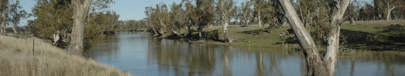 Gulligal Lagoon, which is located about halfway between Gunnedah and Boggabri on the western side of the Namoi River, NSW, 2005 Credit: Courtesy of Neal Foster