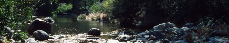 Photo of the Macalister River, Gippsland Basin bioregion
